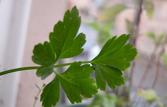 Adet getirici bitkiler