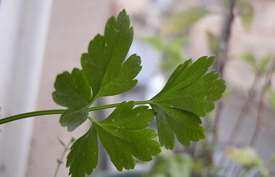 Adet söktürücü bitkiler ve kullanımı
